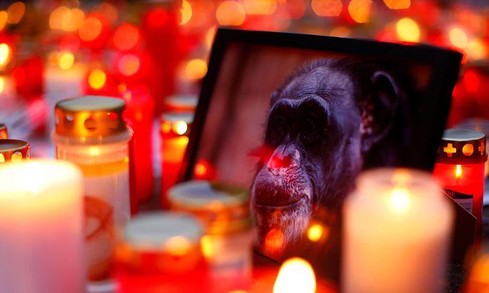 Große Trauer um die Menschenaffen im Krefelder Zoo.