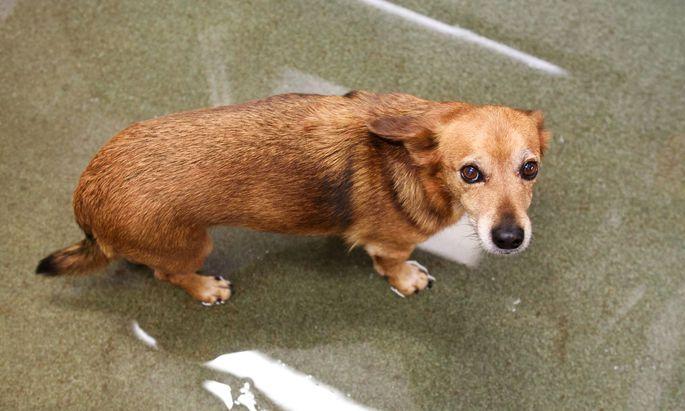 Werden Haustiere aus Geschäftemacherei unnötig, ja schädlich therapiert? Eine Tierärztin behauptet das in einem Buch.