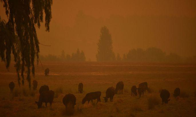 Buschfeuer in Australien.