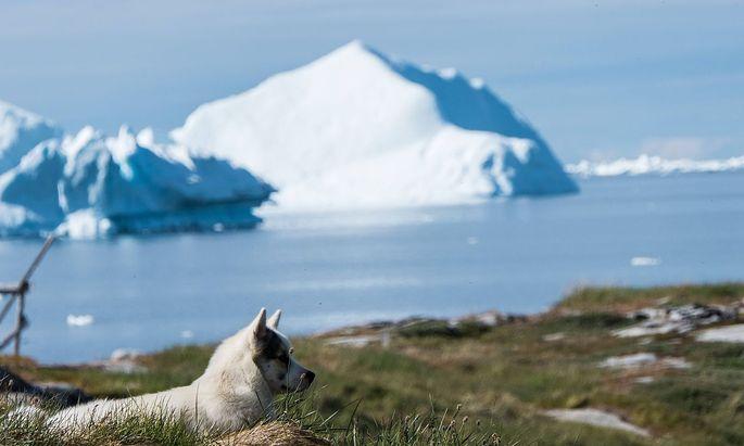 Noch ist Grönland zum größten Teil von Eis bedeckt.