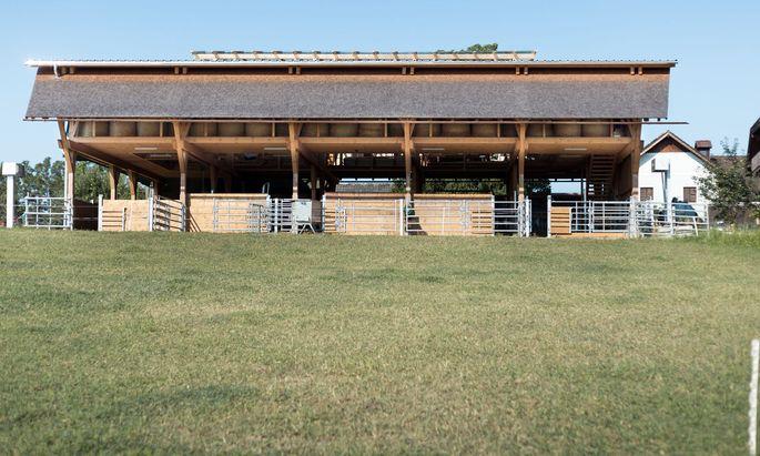 Schützt die Kühe trotz luftigen Aufbaus vor der Witterung: der Wagyū-Stall am Hausruck, geplant von dem in Wien ansässigen Architekten Herbert Schrattenecker.
