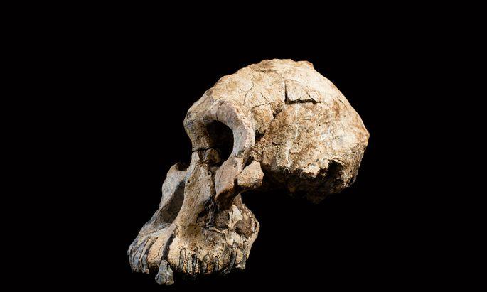 Ein Schädel namens MRD.