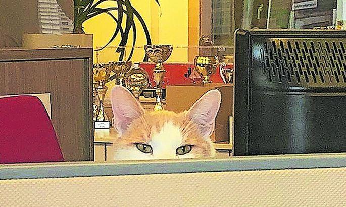 Hat im Büro alles im Blick. Wolfgang alias Marcello.