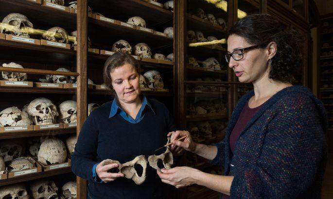 Katharina Rebay-Salisbury (ÖAW) und Doris Pany-Kucera (ÖAW, NHM) mit dem Becken einer bronzezeitlichen Frau.