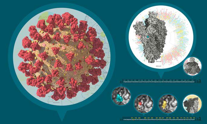 Das SARS-CoV-2 Virus, sein Stammbaum und das Protein, das von der häufigen Mutation betroffen ist.