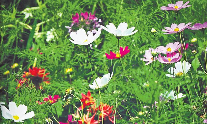 Nur selten fühlt sich der Sommer im Garten perfekt an.