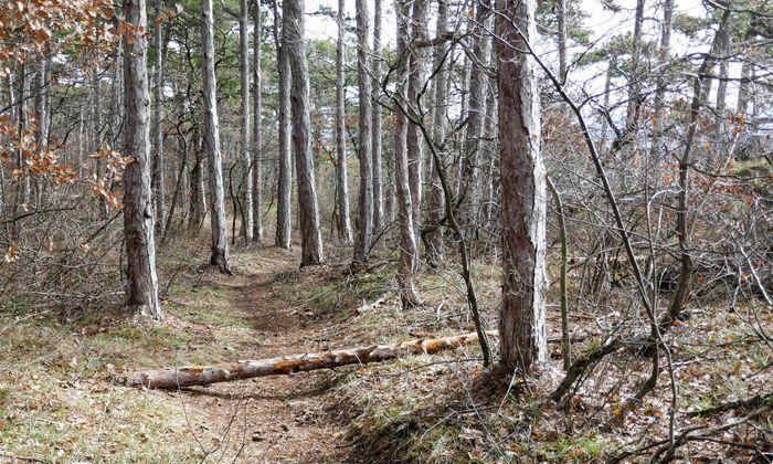 Dieser Stamm liegt nicht zufällig quer über dem neuen Trail.
