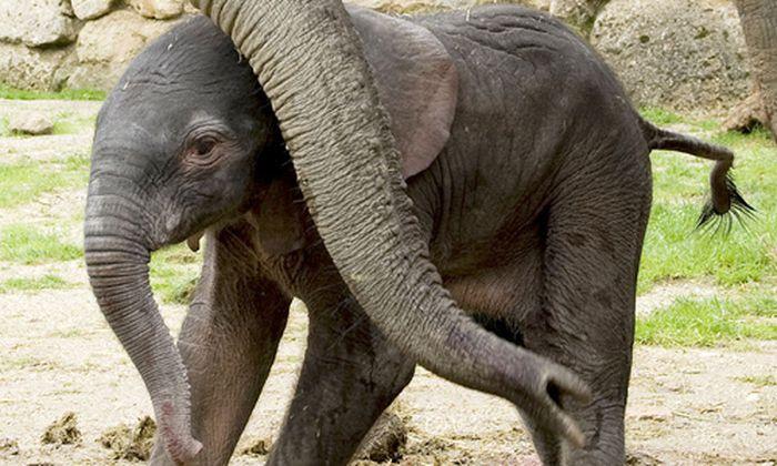 Kilo gesund Schoenbrunner Elefantenbaby