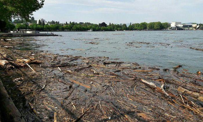 Problematisch, vor allem für die Schifffahrt, ist das viele Treibholz im Bodensee.