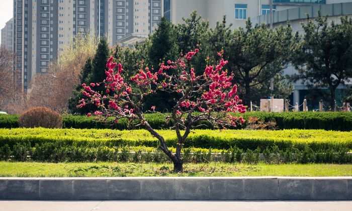 Hochschulen in China, im Bild die Technische Universität in Xi'an, zeigen sich bezüglich Kooperationen zunehmend aufgeschlossen.