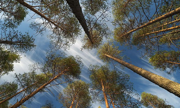 Wälder sind der größte Energielieferant Finnlands