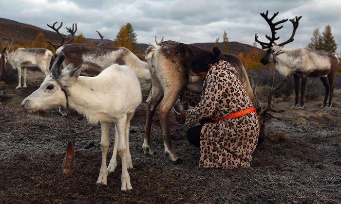 Auch Russlands Nomaden arbeiten in der Ölindustrie. Sie inspizieren etwa die Ölpipelines entlang alter Rentierrouten.