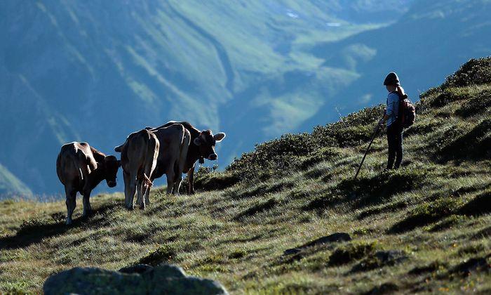 Archivbild aus Vorarlberg