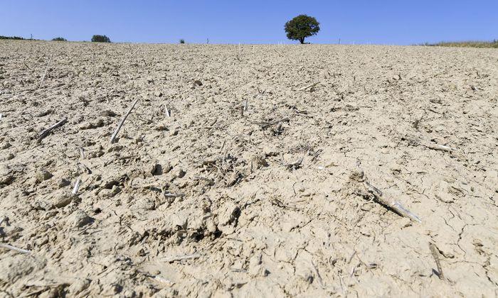 Dürre und Hitze treffen die Landwirtschaft hart, doch sie ist mitverantwortlich.