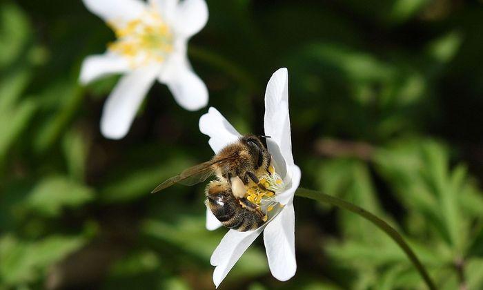 Symbolbild: Bienen.