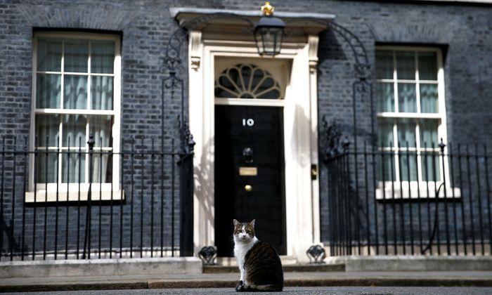 """Mit Sicherheit nicht Larry, """"Chief Mouser"""" in der Downing Street 10. Wer Theresa May als Premier beerben darf, wird im Juli feststehen. Larrys Posten bleibt von den Personalrochaden aber unberührt."""