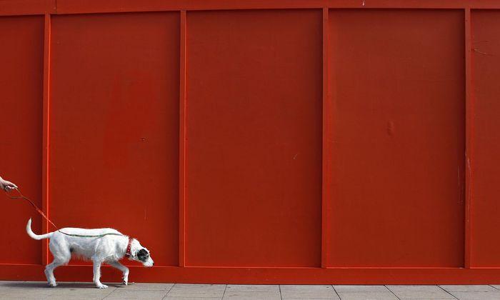 Der Umgang mit Hunden sorgt oft für Probleme.