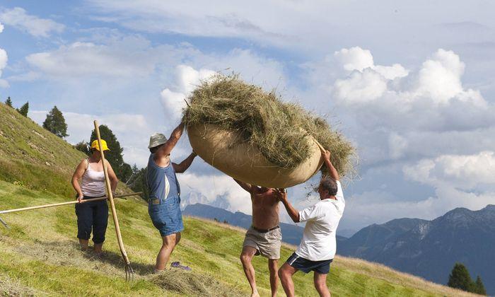 Archivbild: Heuarbeit in den Südtiroler Dolomiten