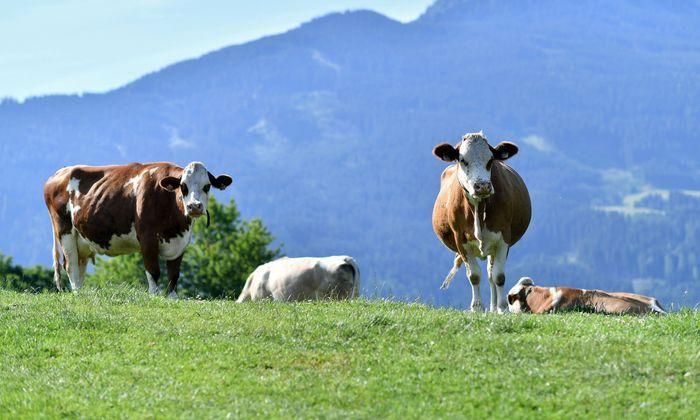"""Der Landwirt hätte an einem """"neuralgischen"""" Punkt, einen Zaun errichten müssen"""