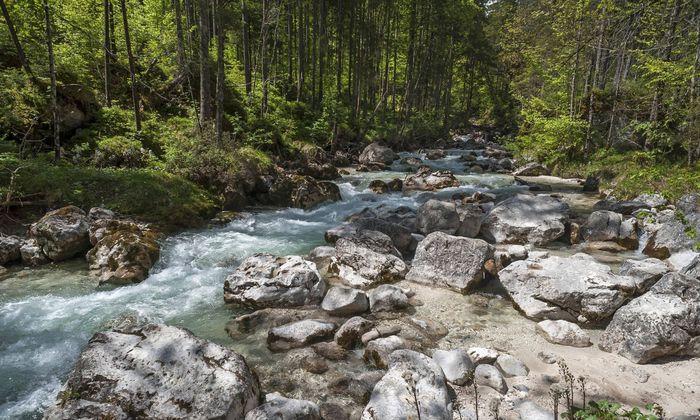 Im Oberlauf von Flüssen kommen kaum langkettige Omega-3-Fettsäuren vor. Trotzdem haben Forellen hier viel davon im Fett.