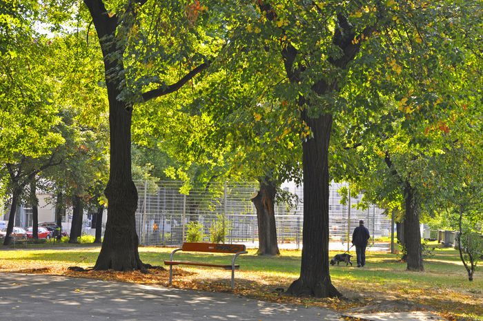 Alte Bäume bieten bessere Kühlungseffekte und mehr Ökosystemdienstleistung.