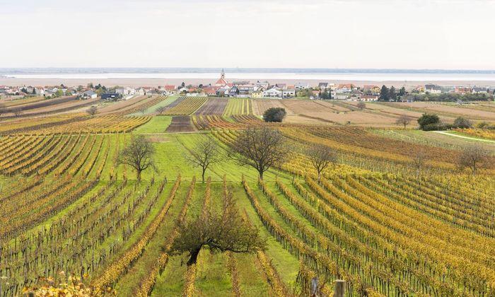 Blick ins Burgenland / Neusiedler See