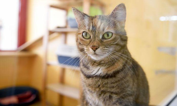 Kann der Vermieter verbieten, sich eine Katze anzuschaffen?