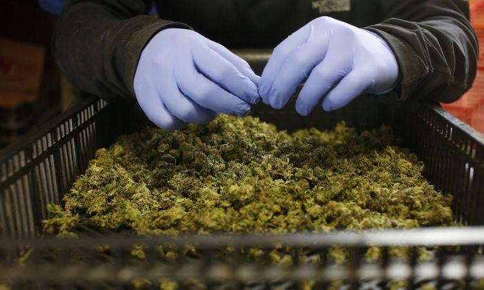 Die Aktien der Cannabis-Firmen haben an der Börse teilweise mehr als die Hälfte an Wert eingebüßt.