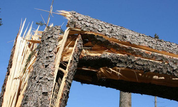Sturmschaden im Wald - Storm damage in a wood