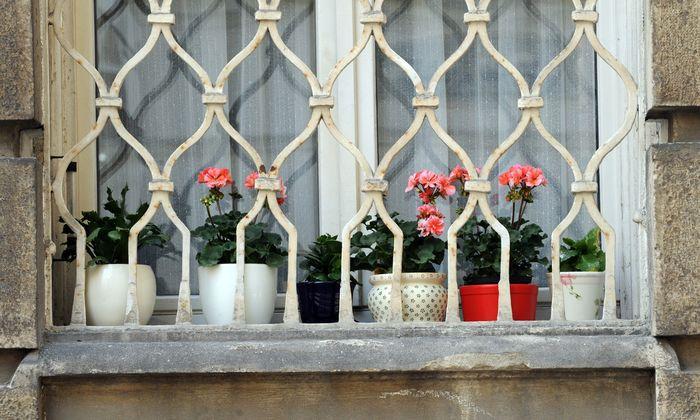 Worum es nicht nur im Damischtal geht: Die schöneren Blumen, die größere Ernte, die höheren Einnahmen – und die tieferen Abgründe.