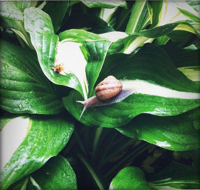 Im Garten ist alles im Wandel – mitunter auch aufgrund der Schnecken.