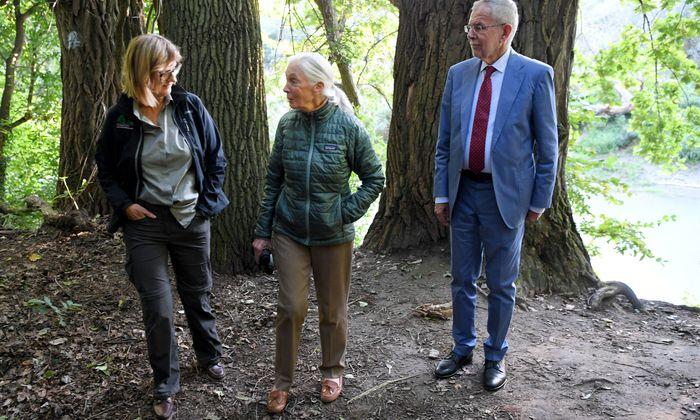Umweltministerin Maria Patek (l.) findet positive Worte zur Entwicklung in Sachen Umwelt. Ob das auch Thema bei der jüngsten Wanderung durch den Auwald bei Orth mit Umweltaktivistin Jane Goodall und Bundespräsident Alexander Van der Bellen war?