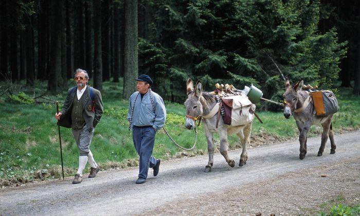 Wandergruppe mit Eseln