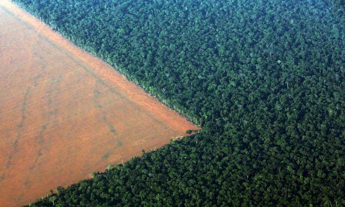 Sojabohnen statt Regenwald: Im Amazonasbecken breiten sich die Agrarflächen aus.