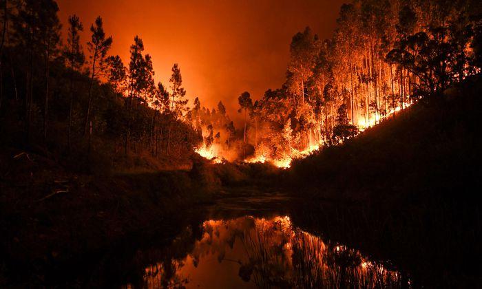 Feuersbrunst in portugiesischen Wäldern: Szene bei der Ortschaft Penela im Bezirk Coimbra.