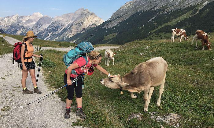 Archivbild aus dem Karwendel in Tirol
