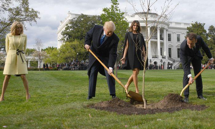 Ein gemeinsam in Washington eingegrabener Baum war eingegangen
