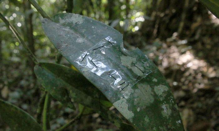 Folien auf Blättern und Plastik flaschen an Baumstämmen: Die Forscher wollen wissen, welche Mikroorganismen auf diesen Kunststoffen wachsen können.