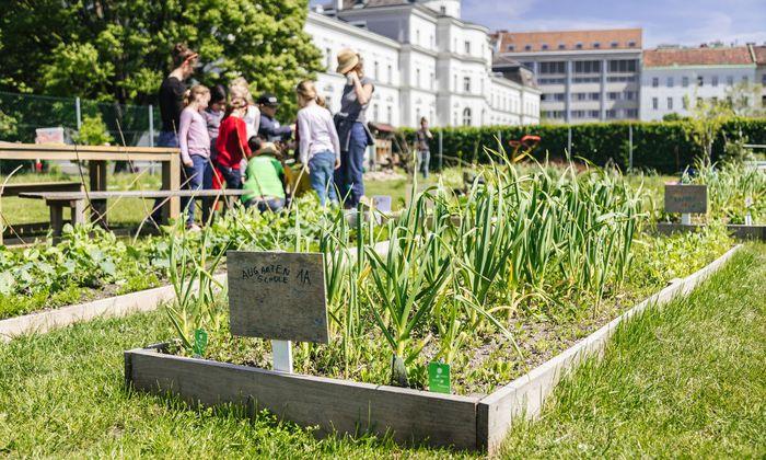 Kinder wie Erwachsene können in der Cityfarm (hier bei Sonnenschein) den Garten erleben und neue Sorten kennenlernen.