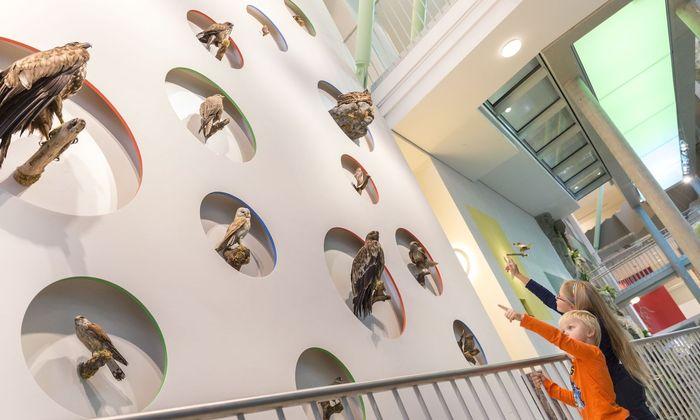 Im Haus der Natur in St. Pölten können heimische Vogelarten entdeckt werden.