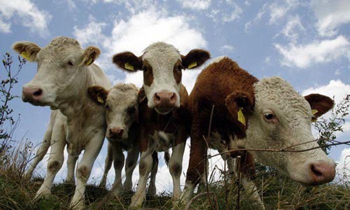 Forschung Gesundes Tier Teller