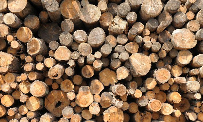 Offiziell werden 17,9 Mio. Kubikmeter Rundholz produziert – inoffiziell weitaus mehr.