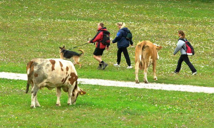 Ein Verhaltenskodex für Wanderer, Spaziergänger und Touristen, die auf Almen unterwegs sind, soll ausgearbeitet werden.