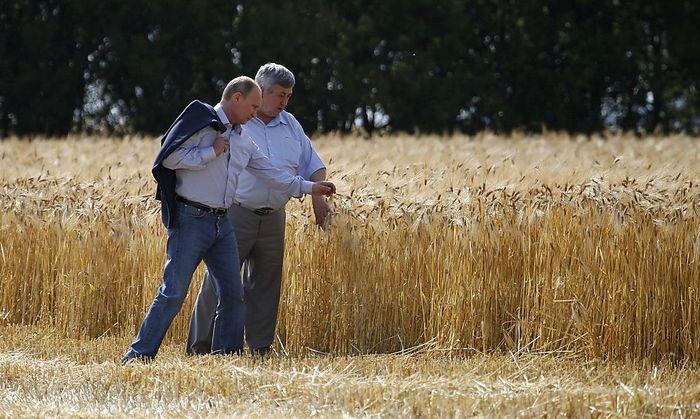 Russia's President Putin he visits a barley field near Grigoropolisskaya