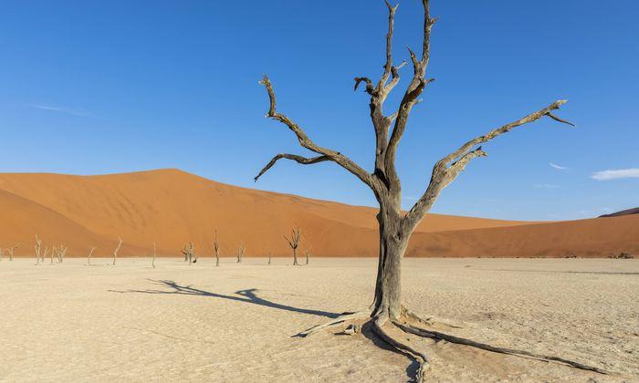 Heißer geht es kaum als in der Salz-Ton-Pfanne des Sossusvlei, die von hohen Dünen umgeben ist. Die höchste heißt Düne 45 und ist bis 170 Meter hoch.