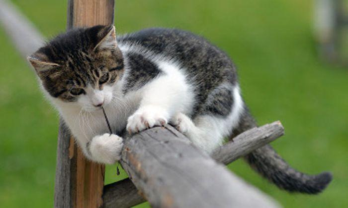 Irgendwo Welt stirbt gerade ein Kätzchen