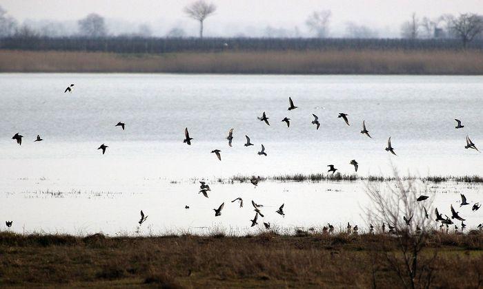 BIRDWATCHING IM NATIONALPARK NEUSIEDLERSEE
