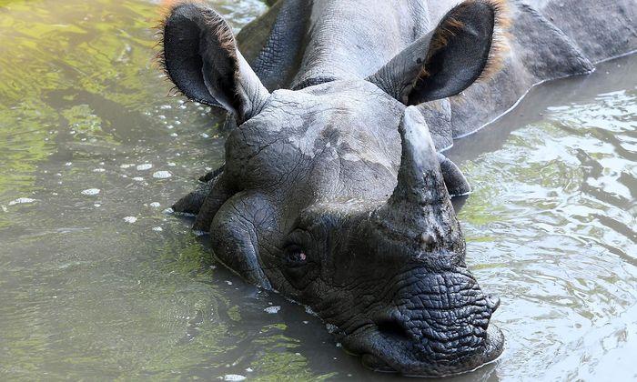 Der Handel mit Wildtierprodukten bleibt in China strenger reglementiert.