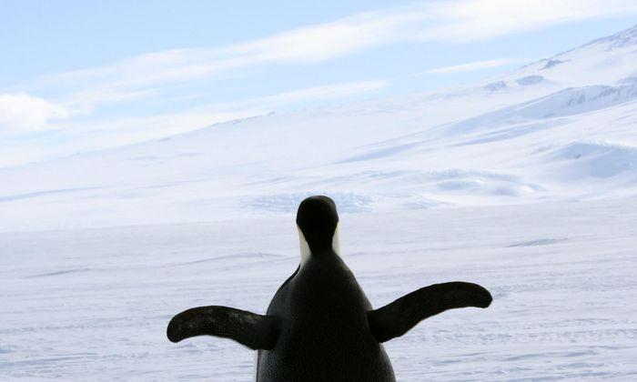"""Jedes Mal, wenn ein Mensch """"Ich auch"""" sagt, explodiert in der Antarktis ein Babypinguin."""