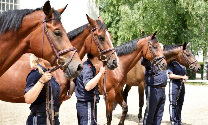 Die Pfotenhilfe will die Polizeipferde aufnehmen